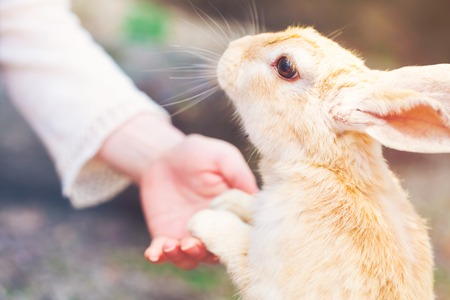 Photo for Rabbit holding hands with a senior woman - Royalty Free Image