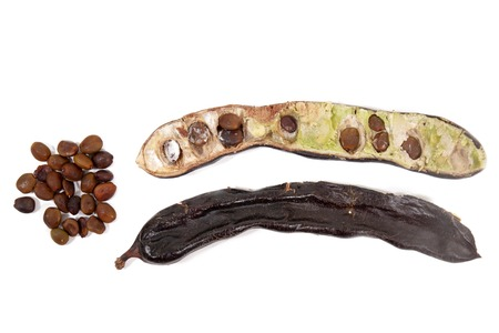 Photo for carob fruits with leafs isolated over a white background. - Royalty Free Image