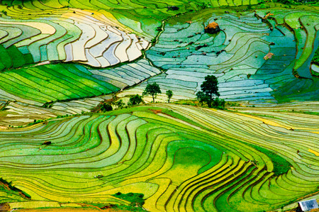 Photo pour Terraced ricefield in water season in laocai, Vietnam - image libre de droit
