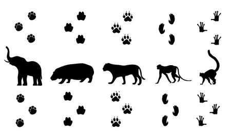 Illustration pour Vector set of walking jungle animal tracks - image libre de droit