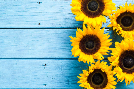 Photo for sunflowers heads on wooden background, copy space - Royalty Free Image