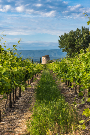 Photo for Vineyard in Provence region,France - Royalty Free Image