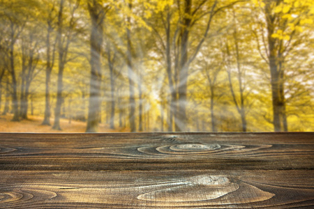 Photo for Autumn forest with wooden boards for product display or montage - Royalty Free Image