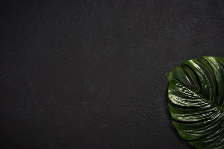 Photo for Palm leaf over dark concrete stone slate - Royalty Free Image