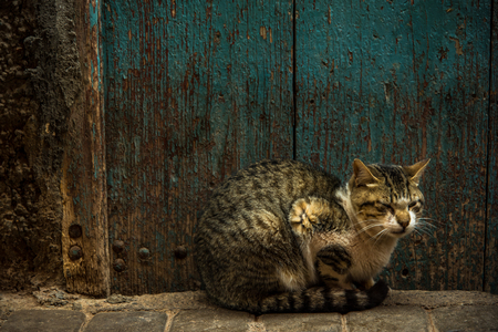 Foto de Cat resting beside old wooden door in Morocco. - Imagen libre de derechos