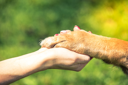 Photo for hand holding dog paw, relationship and love concept. - Royalty Free Image