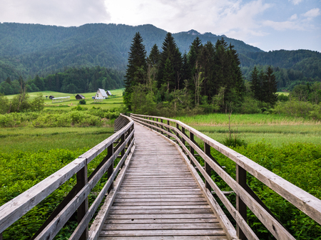 Photo for Wooden footpatch in Zelenci parkland, Slovenia. - Royalty Free Image
