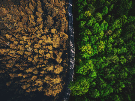 Foto de Half autumn half summer forest top down view - Imagen libre de derechos