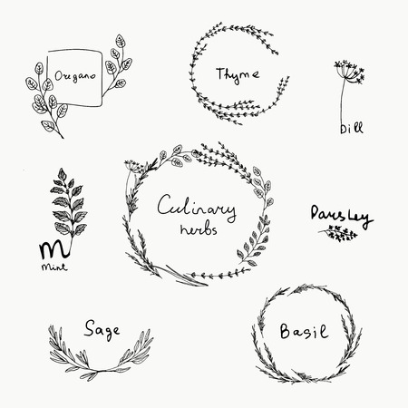 Ilustración de Hand drawn set of culinary herb. Basil and mint, rosemary and sage, thyme and parsley. Food design logo elements - Imagen libre de derechos
