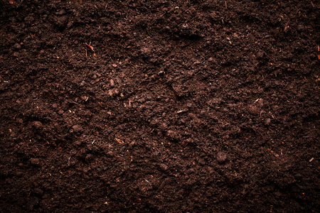 Photo for Soil texture - Royalty Free Image
