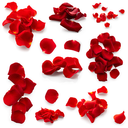 Photo pour Set of red rose petals isolated on white background - image libre de droit
