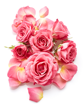 Foto de Pink roses isolated on white background - Imagen libre de derechos