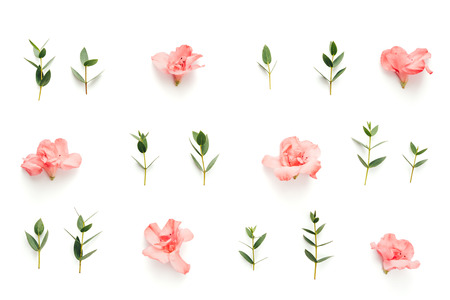 Photo pour Pattern with soft pink azalea flowers and green leaves on white background. View from above. - image libre de droit