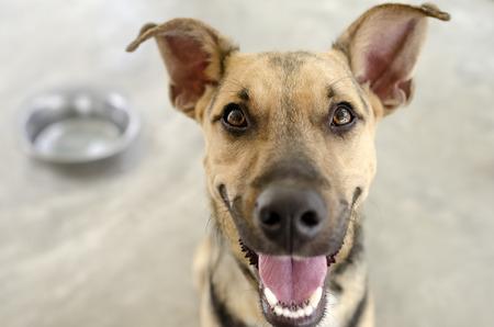 Foto de Dog and Bowl with a hungry happy closeup of a funny dog waiting for his food. - Imagen libre de derechos