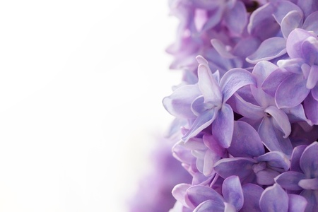 Photo for Beautiful lilac background - Royalty Free Image
