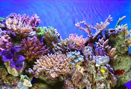 Tropical ocen underwater with corals and fish