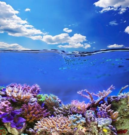 Tropical sea underwater life
