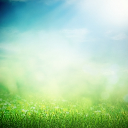 Photo pour Spring sky with sunny field with growing flowers and grass - image libre de droit