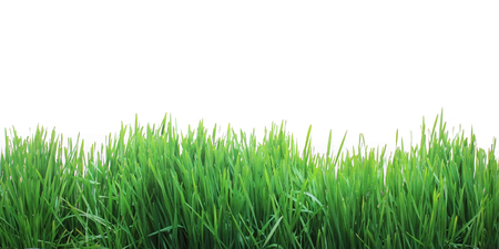 Photo for Growing fresh grass - Royalty Free Image