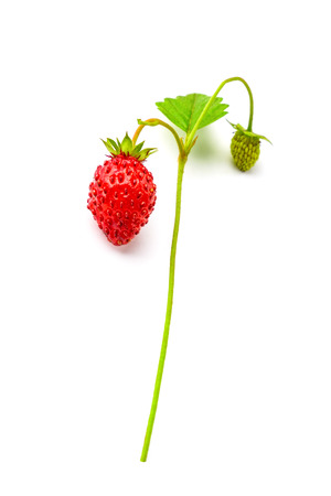 Foto de Ripe single forest strawberry - Imagen libre de derechos