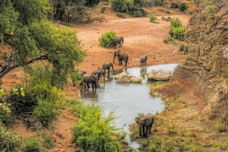 Photo pour Elephants drinking water at the viewpoint Red Rock in the Kruger national park - image libre de droit
