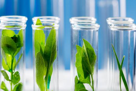Foto de Green fresh plants grown up in test tubes in laboratory. - Imagen libre de derechos