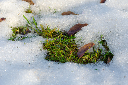 Foto de Thaw, snow and ice melt, sun, light and spring return, grass comes out, close up - Imagen libre de derechos