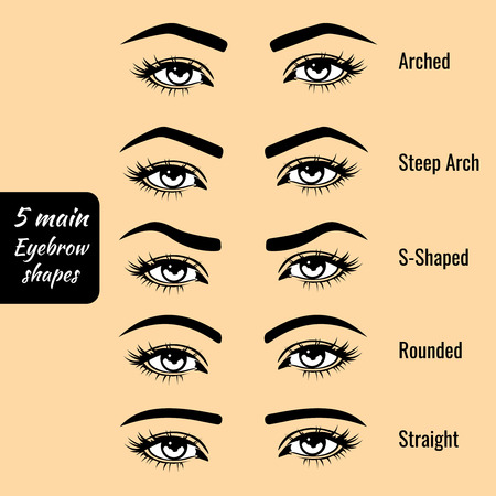 Illustration for 5 basic eyebrow shape types vector illustration. Fashion female brow - Royalty Free Image