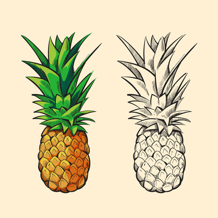Illustration pour Outline pineapple and color cartoon pineapple with green leaves vector illustration - image libre de droit