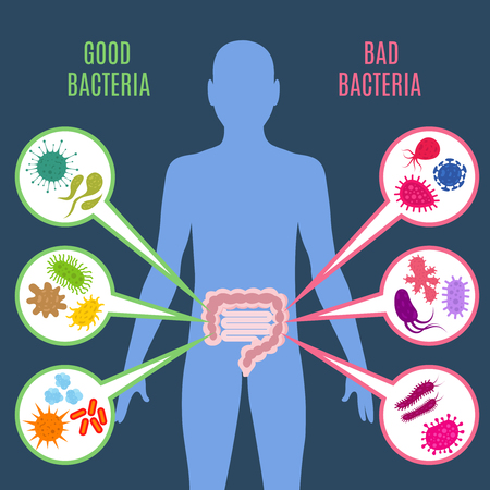 Illustration pour Intestinal flora gut health vector concept with bacteria and probiotics icons, Human flora good and bad microorganism illustration - image libre de droit