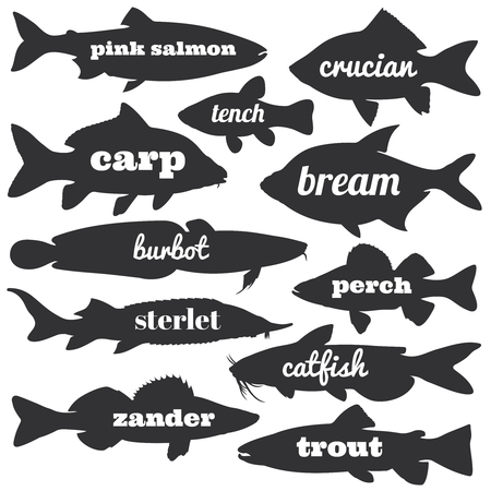 Commercial fish vector silhouettes with names calligraphy