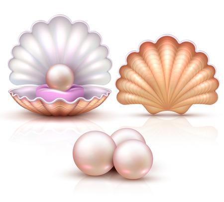 Ilustración de Opened and closed seashells with pearls isolated. Shellfish vector illustration for beauty and luxury concept - Imagen libre de derechos