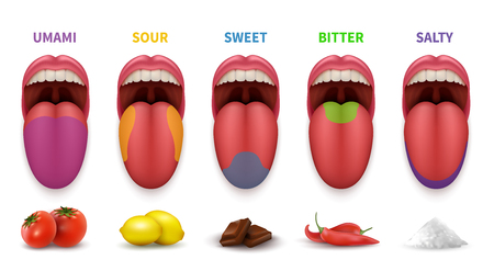 Illustration for Human tongue basic taste areas. Smack map in mouth sweet, salty, sour, bitter and umami vector diagram isolated on white background - Royalty Free Image
