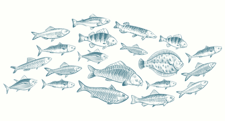 Ilustración de Hand sketched fish vector illustration. Underwater life banner for restaurant menu. Underwater seafood, ocean food sketch - Imagen libre de derechos