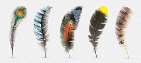 Illustrazione per Realistic bird feathers. Detailed colorful feather of different birds. 3d vector collection isolated on transparent background. Illustration feather bird, peacock fluffy elegance plumage - Immagini Royalty Free