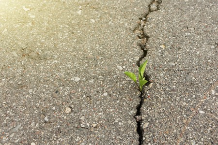 Photo for green plant growing from crack in asphalt. - Royalty Free Image