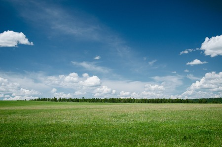 Photo pour Simple summer landscape with green grass and blue sky - image libre de droit