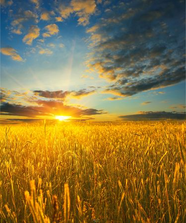 Photo pour Sunrise over field with wheat - image libre de droit