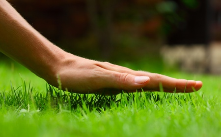 Foto de Hand above green fresh grass on a meadow. Shallow DOF - Imagen libre de derechos