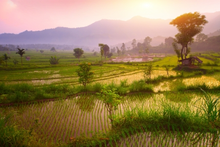Photo for Tropical valley with rice terraces and trees. Bali. Indonesia - Royalty Free Image