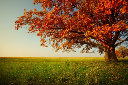 Foto de Big autumn oak and green grass on a meadow around - Imagen libre de derechos