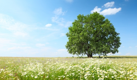 Photo for Green summer meadow with flowers and herbs and big oak tree - Royalty Free Image