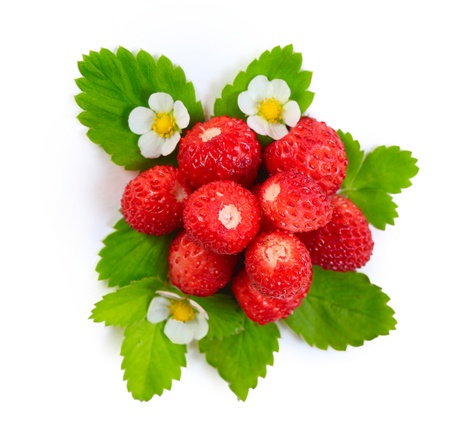 Photo pour Ripe strawberry with green leaves and blossoms isolated on white background - image libre de droit