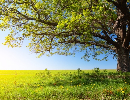 Photo pour Spring tree with fresh green leaves on a blooming meadow - image libre de droit