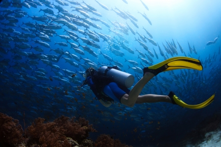 Photo for Scuba diver finning towards school of Jack fish in a tropical sea - Royalty Free Image