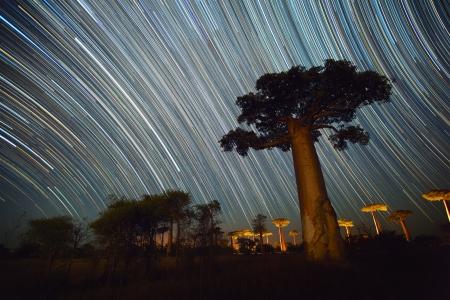 Foto de Baobab and night sky with star trails. Madagascar - Imagen libre de derechos