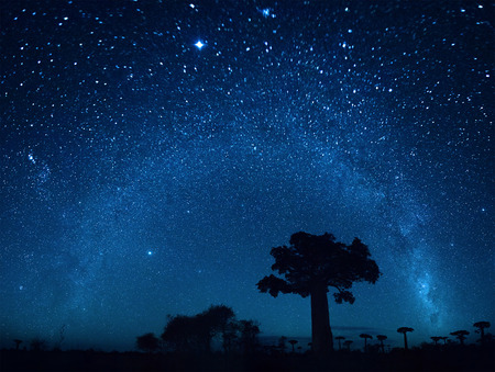 Photo pour Starry sky and baobab trees. Blurred sky, focus on the tree - image libre de droit