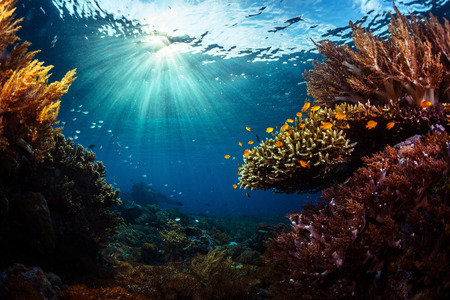 Photo for Underwater shot of the vivid coral reef in tropical sea. Bali Barat National Park, Indonesia - Royalty Free Image