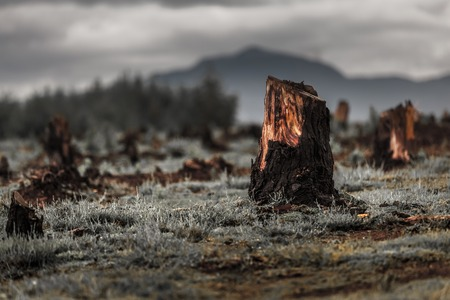 Foto de Stumps on the valley caused by deforestation and slash and burn type of agriculture of Madagascar - Imagen libre de derechos