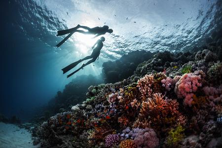 Foto de Two freedivers swimming underwater over vivid coral reef. Red Sea, Egypt - Imagen libre de derechos